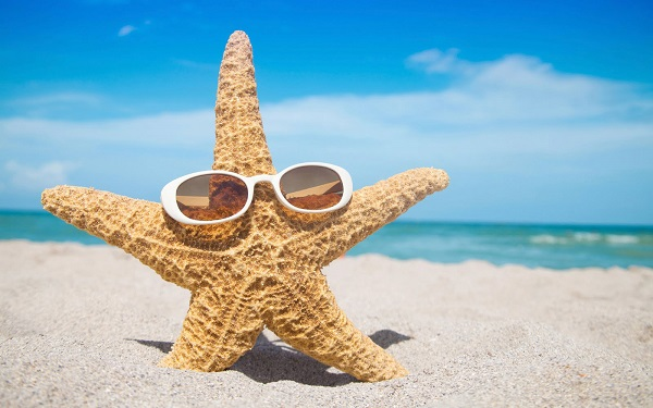 Starfish at the Beach